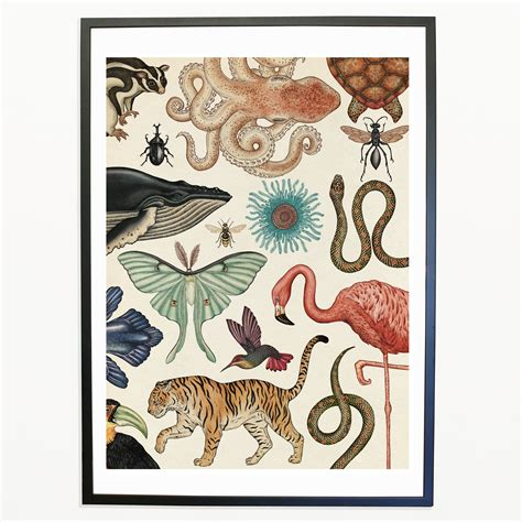animalium welcome to the animalium print katie scott