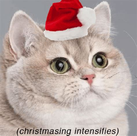merry christmas gifs find share  giphy