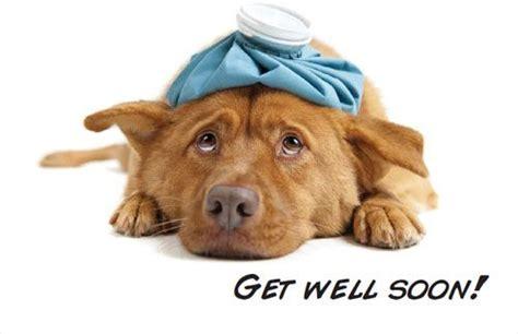 get well soon puppy get well soon get well soon ccmhonline greetings image
