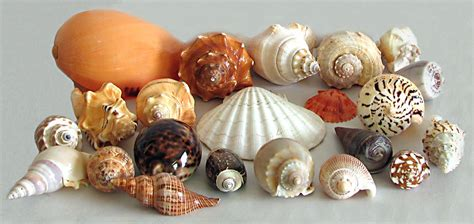 Home Decor Items Online Shopping In India by Shell Decoration Items Buy Online