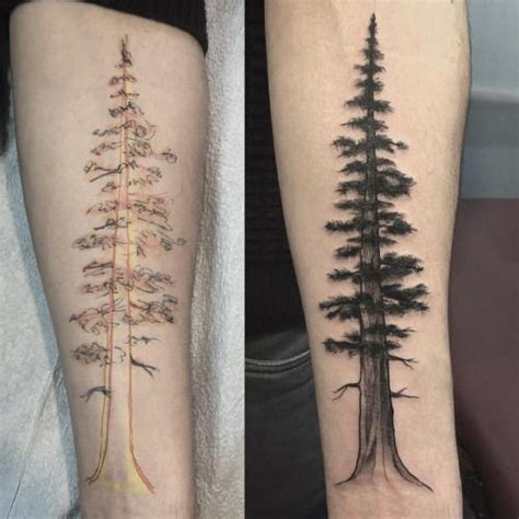 redwood tree tattoo 17 best ideas about redwood on tree