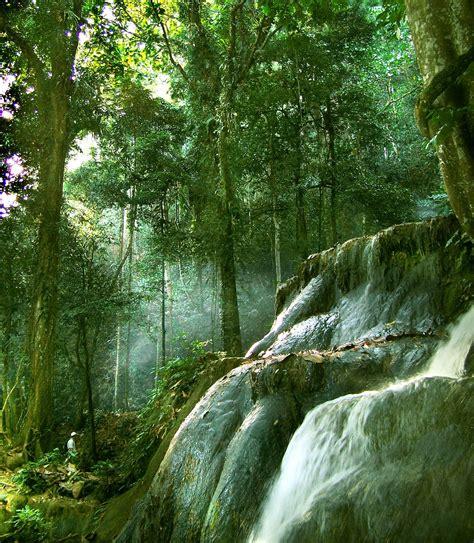 geo sintang blogs pemandangan hutan