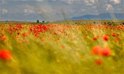 imagenes de paisajes impresionistas impresionismo