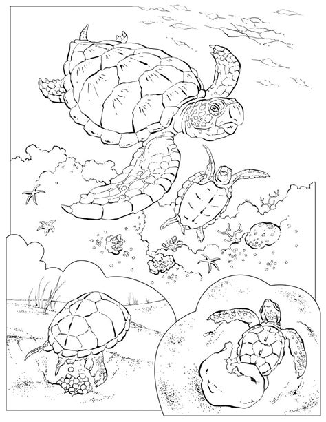 coloring pages animals national geographic coloring book animals a to i sea turtles turtles and