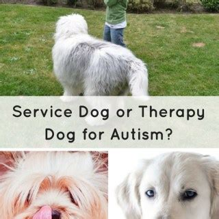 difference between service and therapy animal assisted therapy archives special learning house
