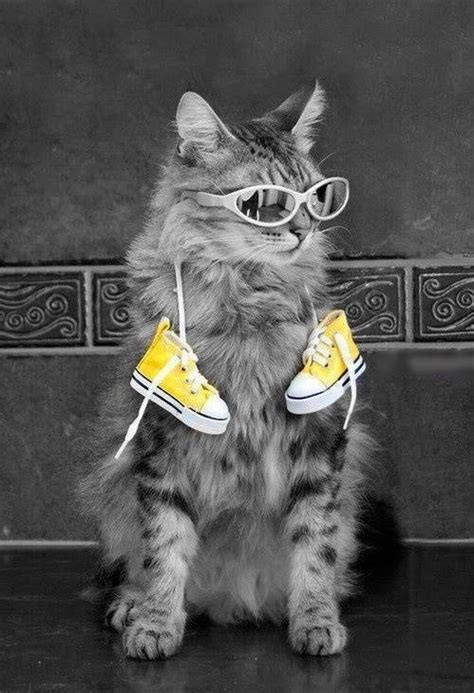 Yellow White Gray Black Meow Leisure S M L Sweater Top 45198 Cat And Yellow Shoes Color Splash Color Splashes