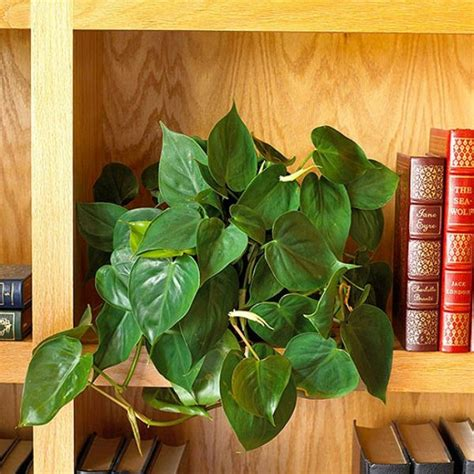 plants  grow  sunlight diynownet