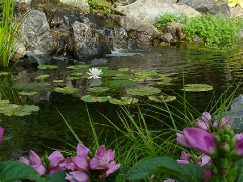 water gardens reflections water gardens