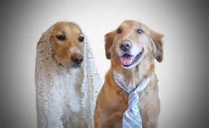 Wedding Venues In Maine Dog Friendly Wedding Venues Vow Wow Wow