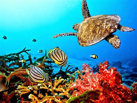 sea turtle live wallpaper free sea turtle hd wallpapers earth