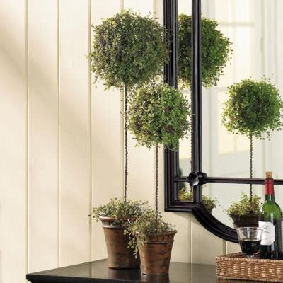 vine topiary vine topiary traditional indoor pots and
