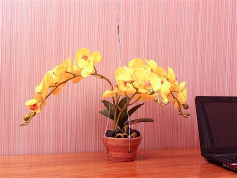 Bunga Anggrek Bulan Kuning jual bunga hias bunga anggrek bulan kuning happy