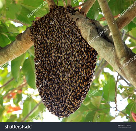 picture of a tree beehive hangs on tree stock photo 123782578