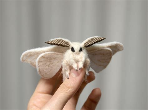 lifespan of a poodle moth 14 looking creatures you ve never seen before one