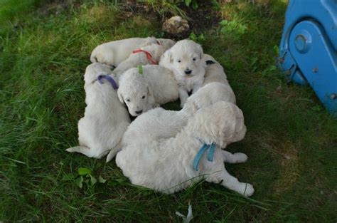 briar ridge puppies 26 best images about our puppies on