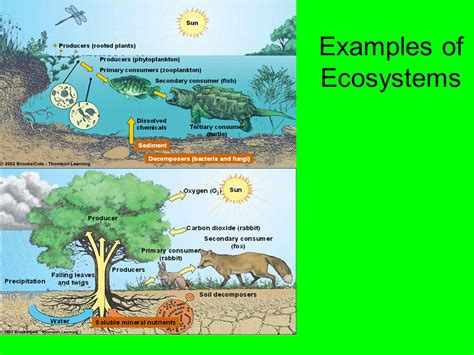 exle of ecosystem ecosystem 4th grade mrs s science class ppt