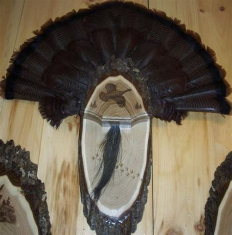 turkey fan and beard mounting pinterest the world s catalog of ideas