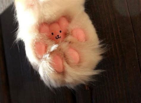 Why Do Cats Paw At The Floor by Care For The Cat Paws Pet Attack