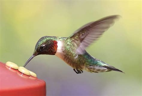 nature museum humming over hummingbirds news