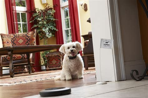indoor dogs indoor systems authority home solutions in the villages community ocala and