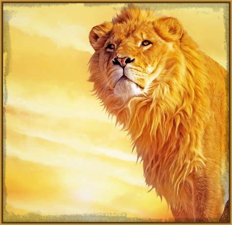 imagenes de leones feroces fotos de leones del africa archivos imagenes de leones
