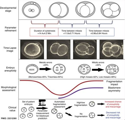 pattern formation during embryonic development is based on abnormal development genetic embryology
