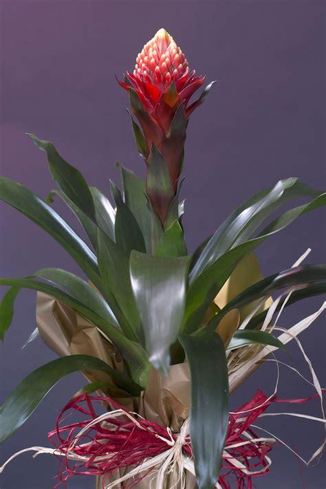 casa di fiori piante di appartamento con fiori galleria di immagini