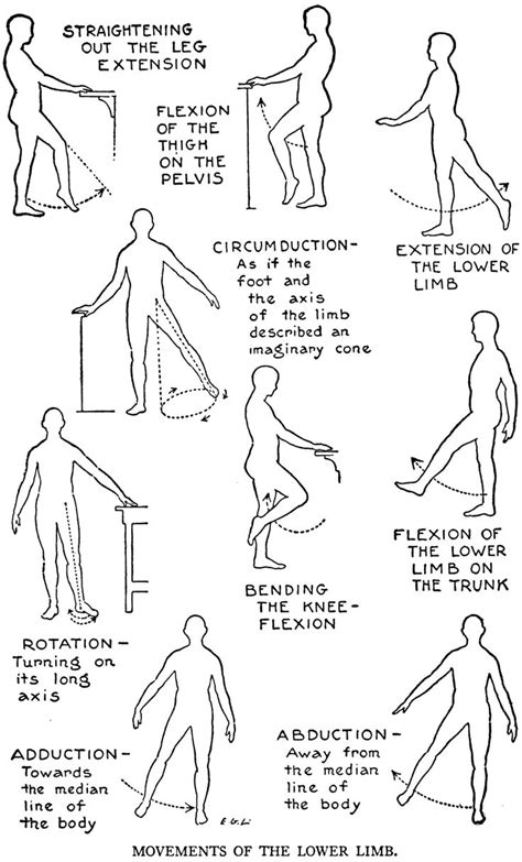 Rang Of Motion Lower Extremities Super Nurse Health