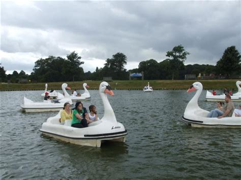 swan boats uk woburn safari park swan boats 169 kenneth allen cc by sa 2