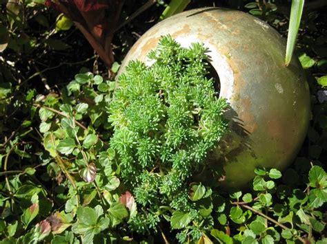 piante grasse in giardino piante grasse da giardino piante grasse