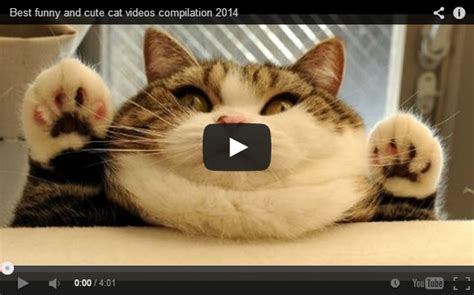 cat episodes awesome and jumping cats