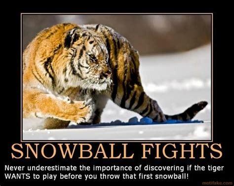 Funny Tiger Memes - some big cat funny memes lions tigers cheetahs