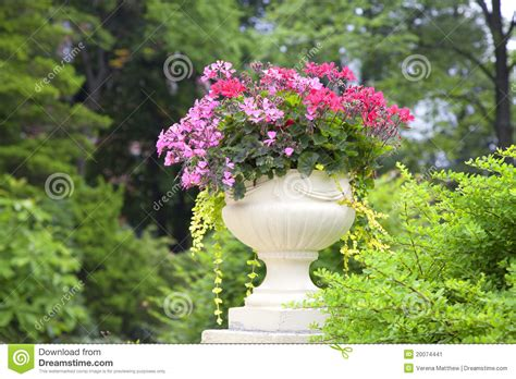 Planter Flowers by Trailing Geranium Flower Planter Stock Image Image
