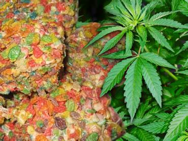 cannabis treats burro cannabis cannabutter underground cannabis