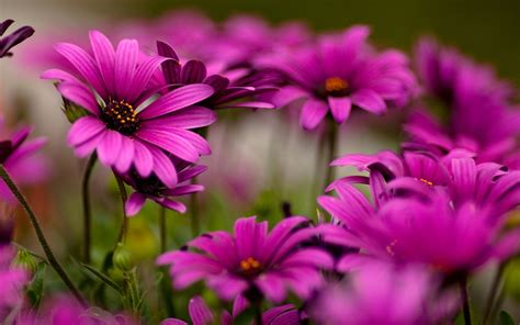 imagenes jpg flores flores moradas bellas hd 2560x1600 imagenes wallpapers