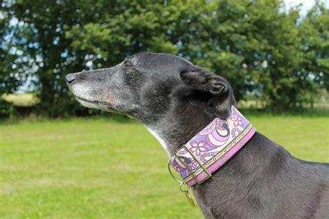 Greyhound Collars Handmade - luxury handmade collars for dogs meggiemoo meggiemoo