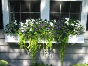white window box planters white splash coleus torenia prurple moon white impatiens