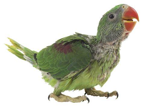 bird care petfinder