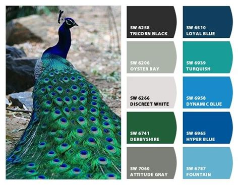 peacock hues paint colors  chip   sherwin williams color schemes peacock color