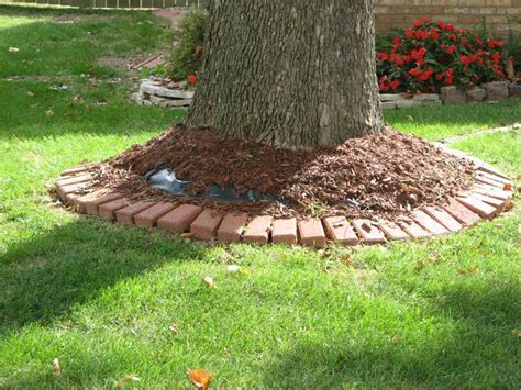 Landscape Fabric Tree Roots Improper And Damaging Gardening Practices