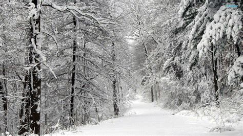 black and white woodland wallpaper snowy forest wallpapers wallpaper cave