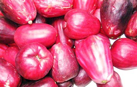 Pupuk Perangsang Bunga Jambu Air pacu jambu bol jamaika berbuah bebeja