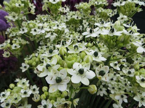 witte border bloemen 25 beste idee 235 n over witte bloemen op pinterest