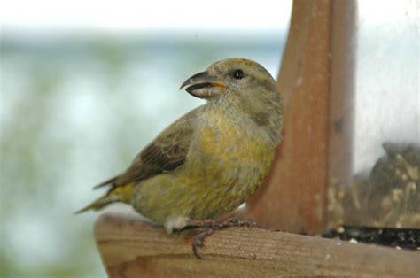 wild birds unlimited answers any backyard bird question
