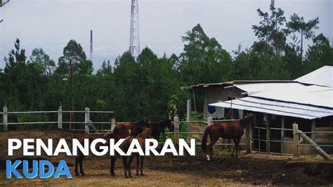 Sho Kuda Di Malang penangkaran kuda kota wisata batu