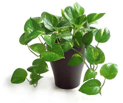 common house plants with shaped leaves d 233 coration salle de bain 224 l aide d utiles et belles