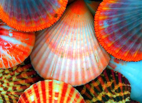 seashell color colorful shells
