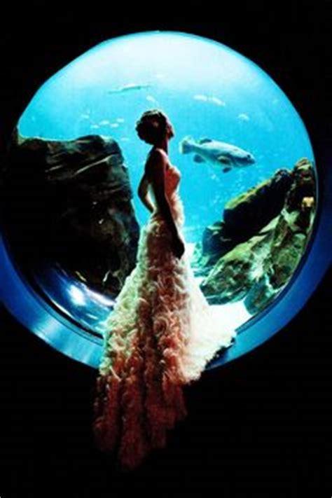 Georgia Aquarium Gift Card - 1000 images about weddings engagements at georgia aquarium on pinterest georgia