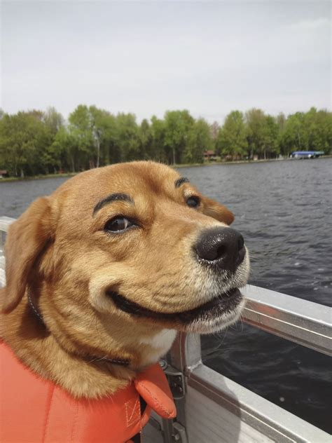 dog vs boat 20 hilarious dogs with eyebrows dose of funny