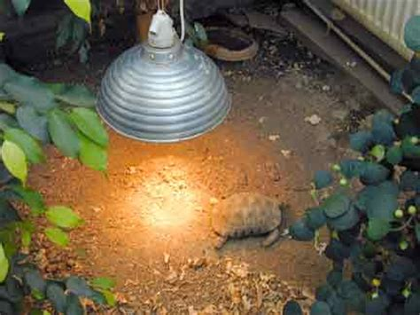 tortoise trust web waking   hibernation